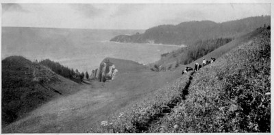 Cape Falson seen from the original Indian trail about 1910. Trees today obscure the view, but the north Neahkahnie trail follows the original route up to the first switchback.