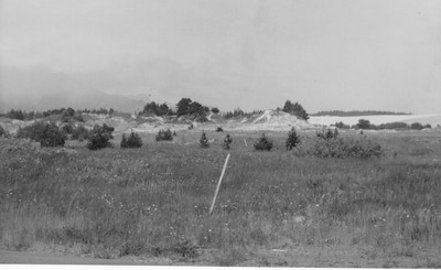 By1961, shore pines planted all over the spit had just begun to emerge from the underbrush.